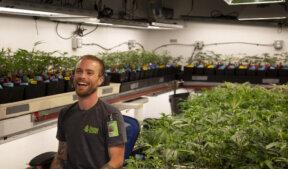 Cannabis caregiver