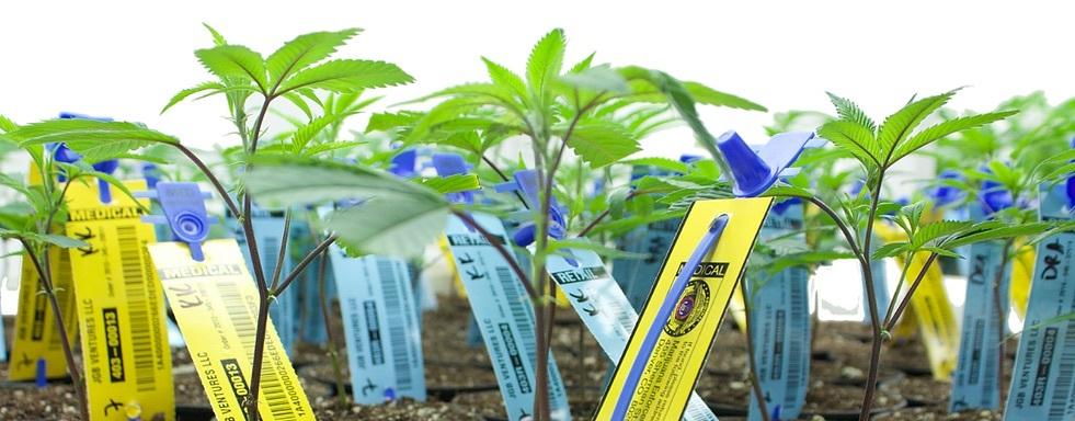 Metrc plant tags