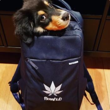 flowhub-cannabis-pos-swag