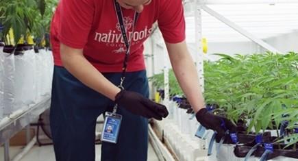 cannabis-grow-software