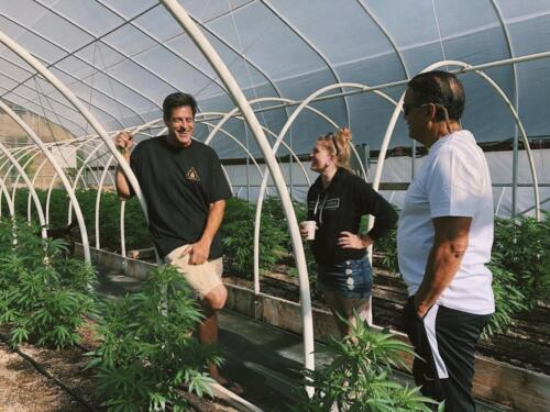 rocky mountain cannabis consulting