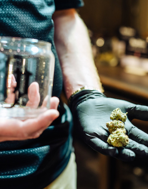 cannabis-diego-pellicer-flowhub