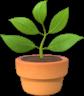 Plant 2x