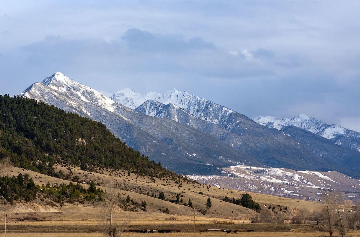 Montana cannabis laws